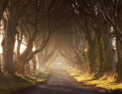 Les Dark Hedges, Irlande du Nord
