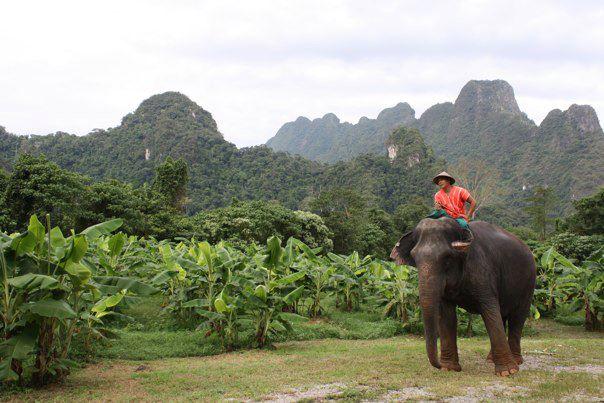 Un mahout au travail