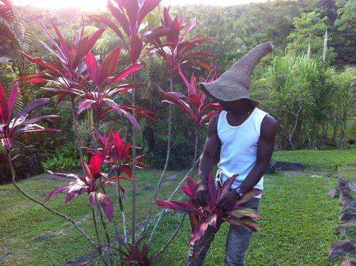 Au cours de la visite, Gilbert Larose et son équipe expliquent l'importance des arbres et plantes dans la vie des Martiniquais.