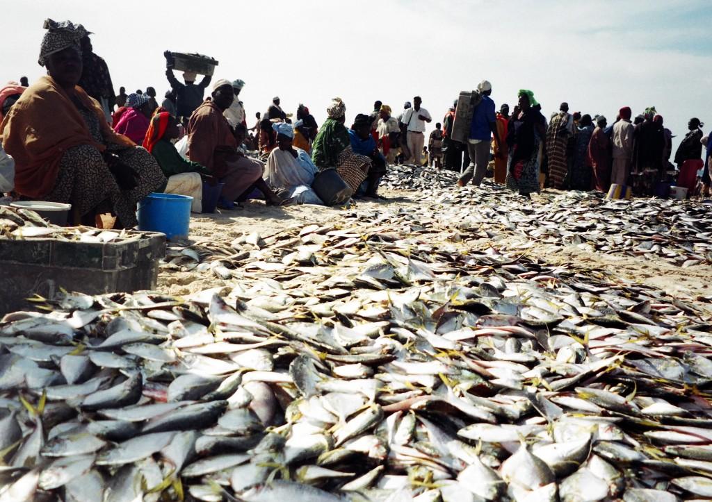 Marché de poissons de Saint-Louis, au Sénégal, 2003