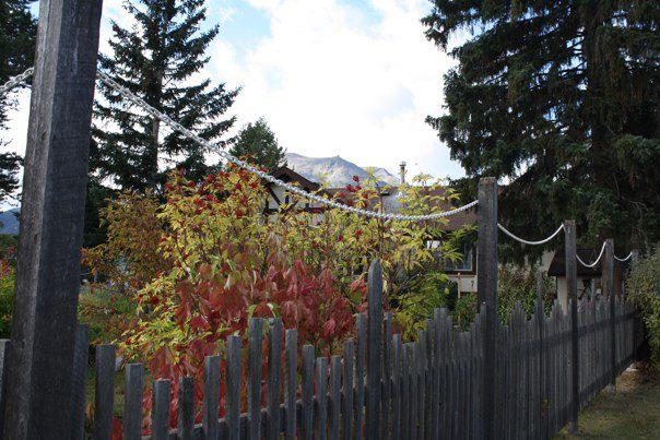 Des clôtures partout pour éviter que les animaux viennent dévaliser les jardins!
